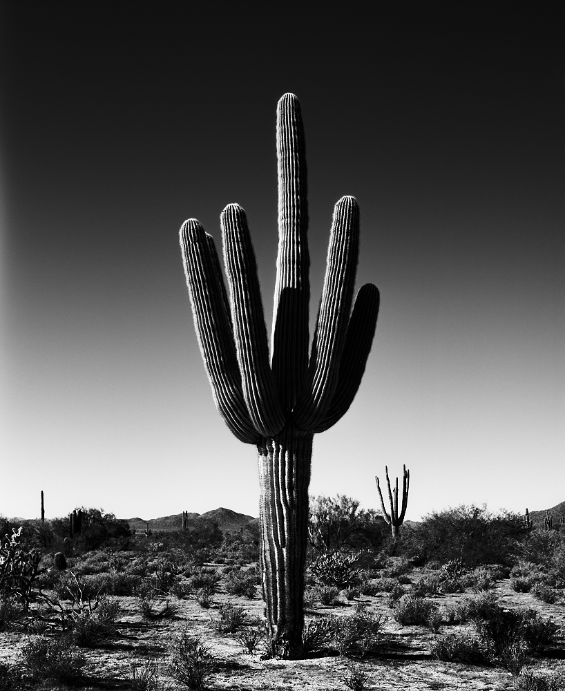 Saguaro VII Black & White, Arizona