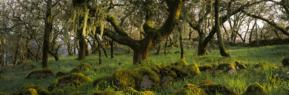 Mossy Oaks Panorama, Wine Country, California