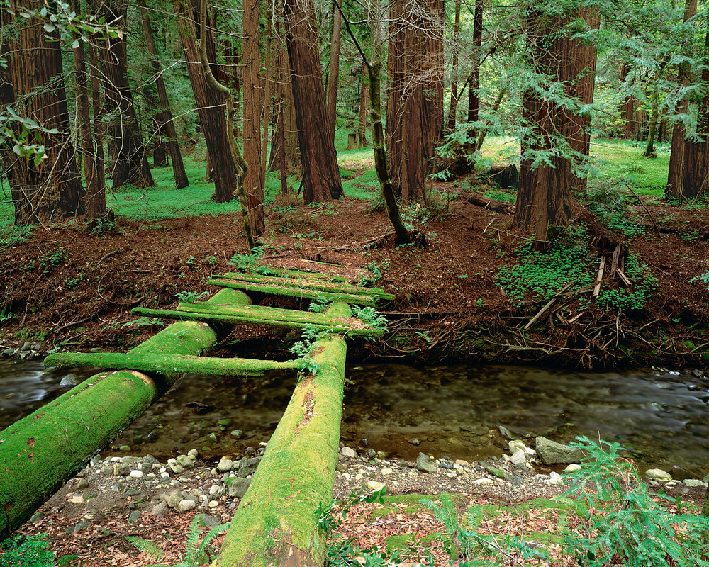 Mossy Bridge, Big Sur, California