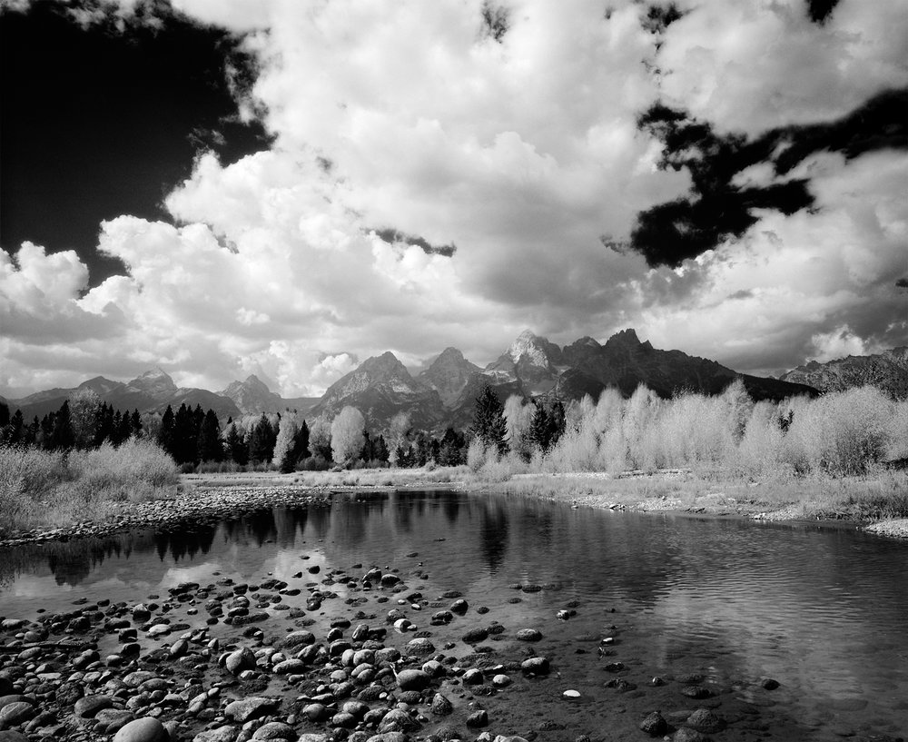 Autumn Glory, Grand Tetons, Black and White