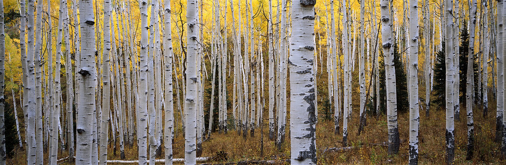 Aspen Dream, Colorado