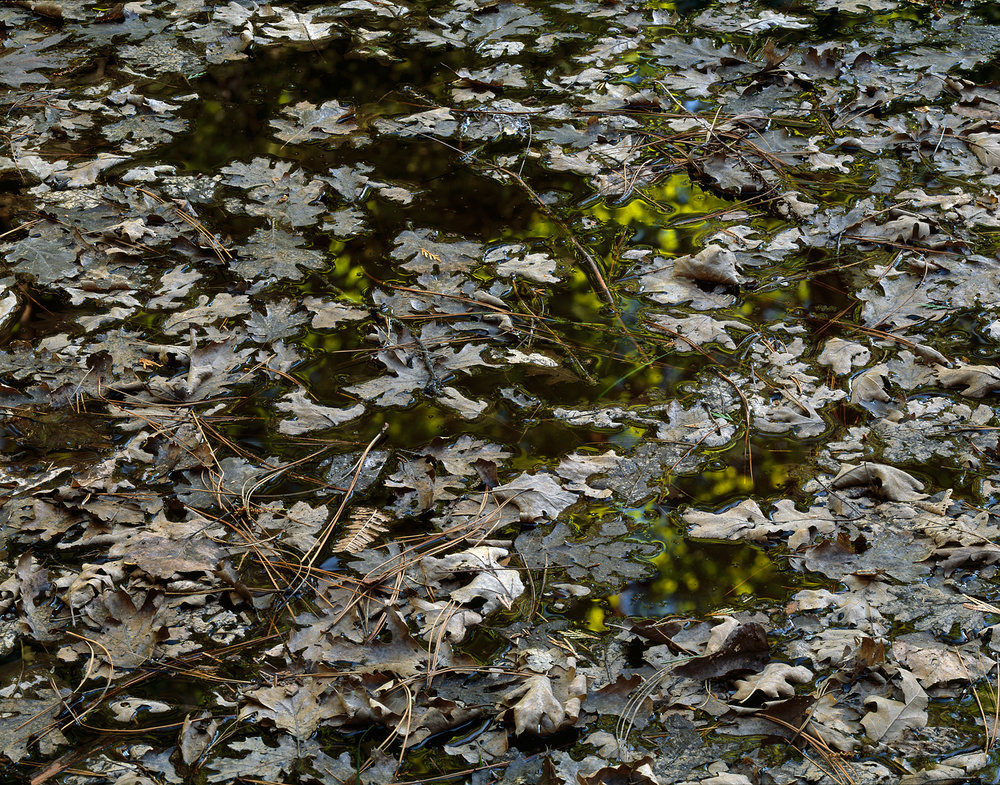 Leaves on Water, Spring Reflection, Yosemite Valley, California