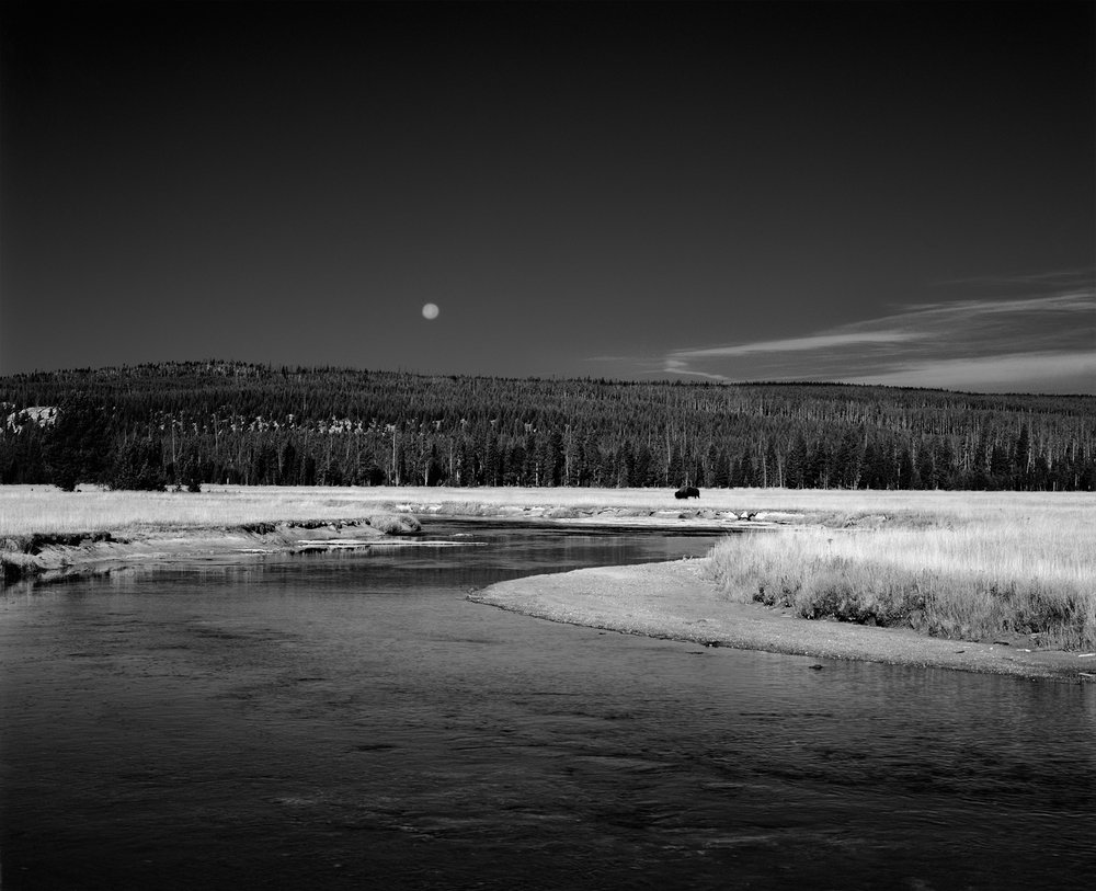 Lone Bison and Full Moon, Yellowstone