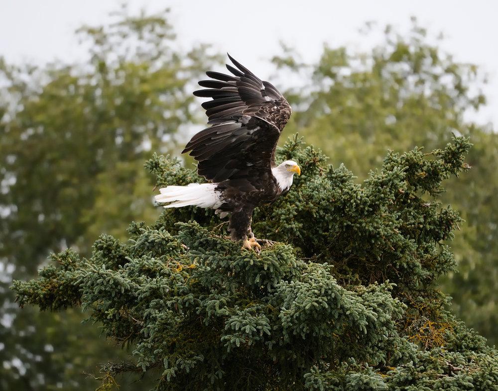 Eagle Landing, Alaska