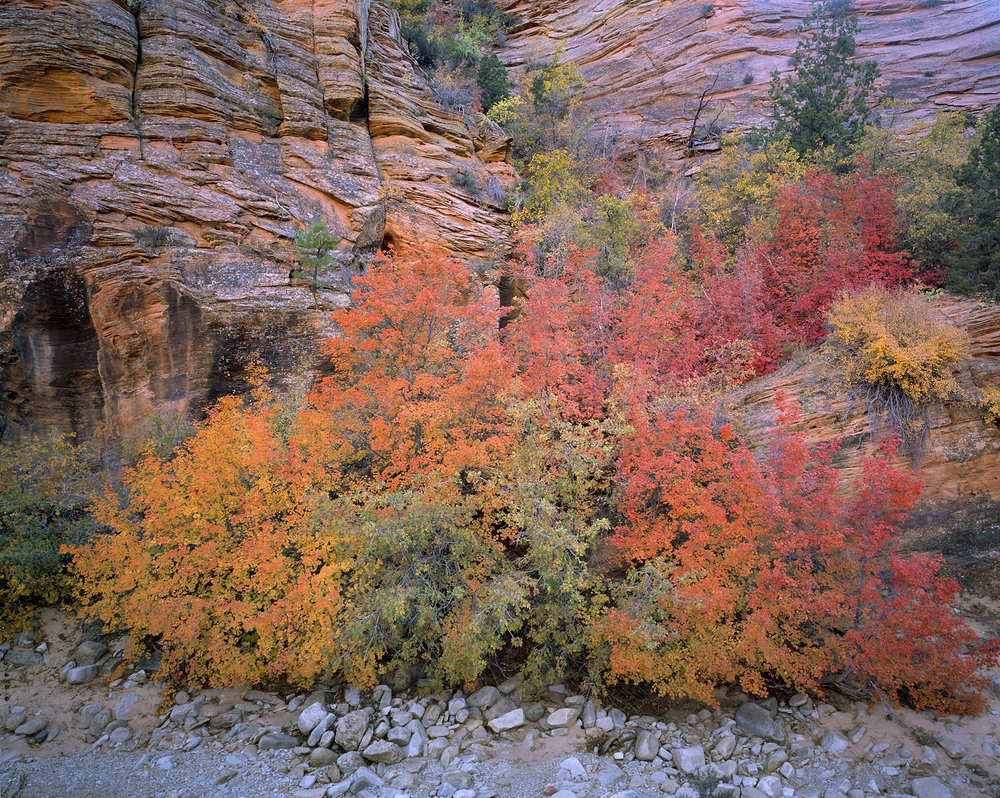 Fall Color & Sandstone, East Zion