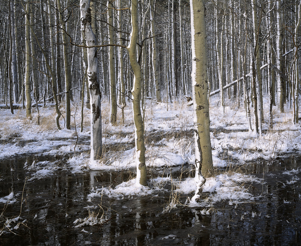 Aspens Snow and reflections color web.jpg