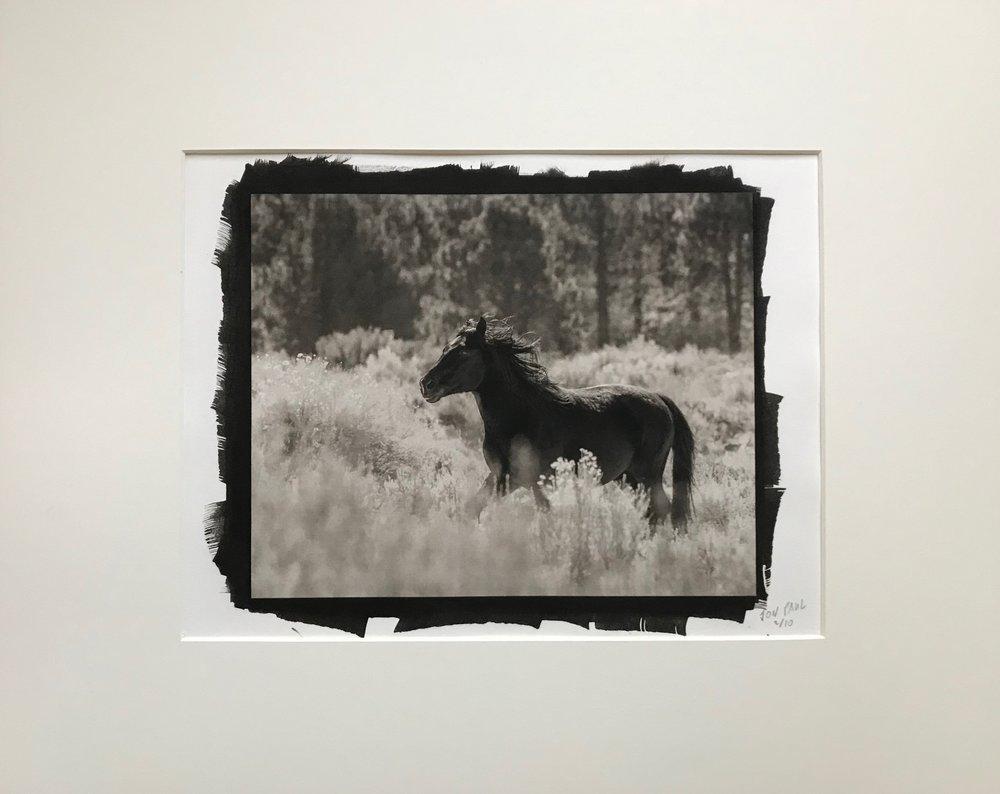 Platinum / Palladium print of a wild horse