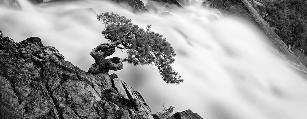 Eagle Falls Bonsai Pano BW 4x10.jpg