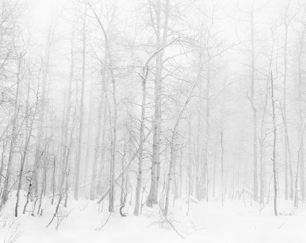 Into the Quiet Aspens 4x5 BW.jpg