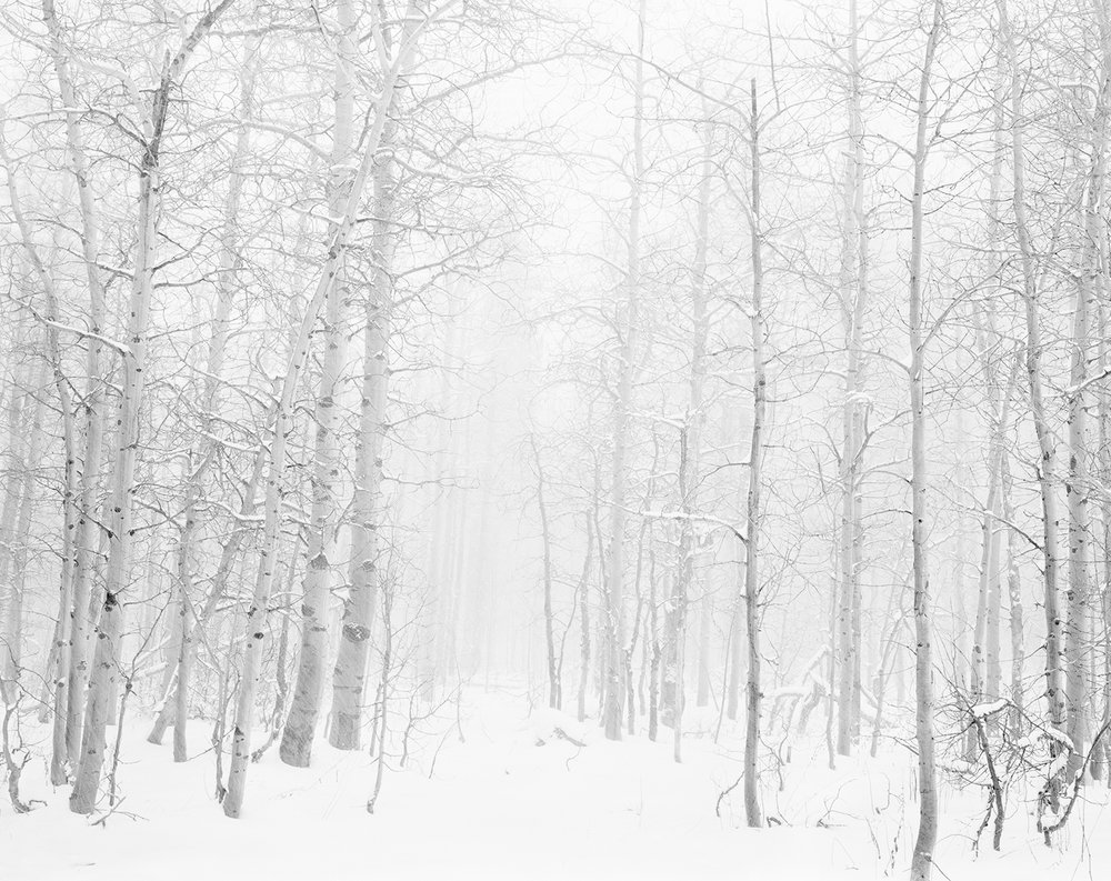 Into the Snowy Aspens 4x5 BW.jpg