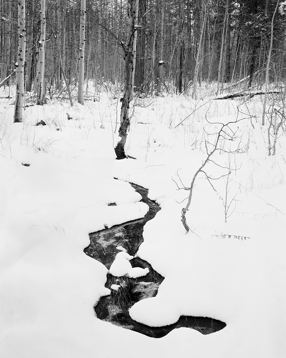 Rivulet and Aspens 4x5 BW.jpg