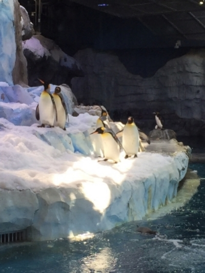 Visiting the Polk Penguin Conservation Center at the Detroit Zoo