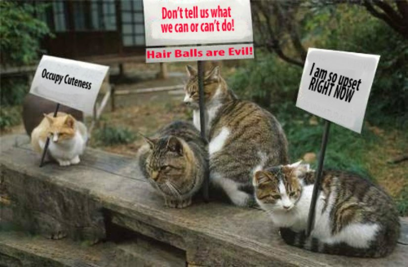 Cats protesting... cat stuff.