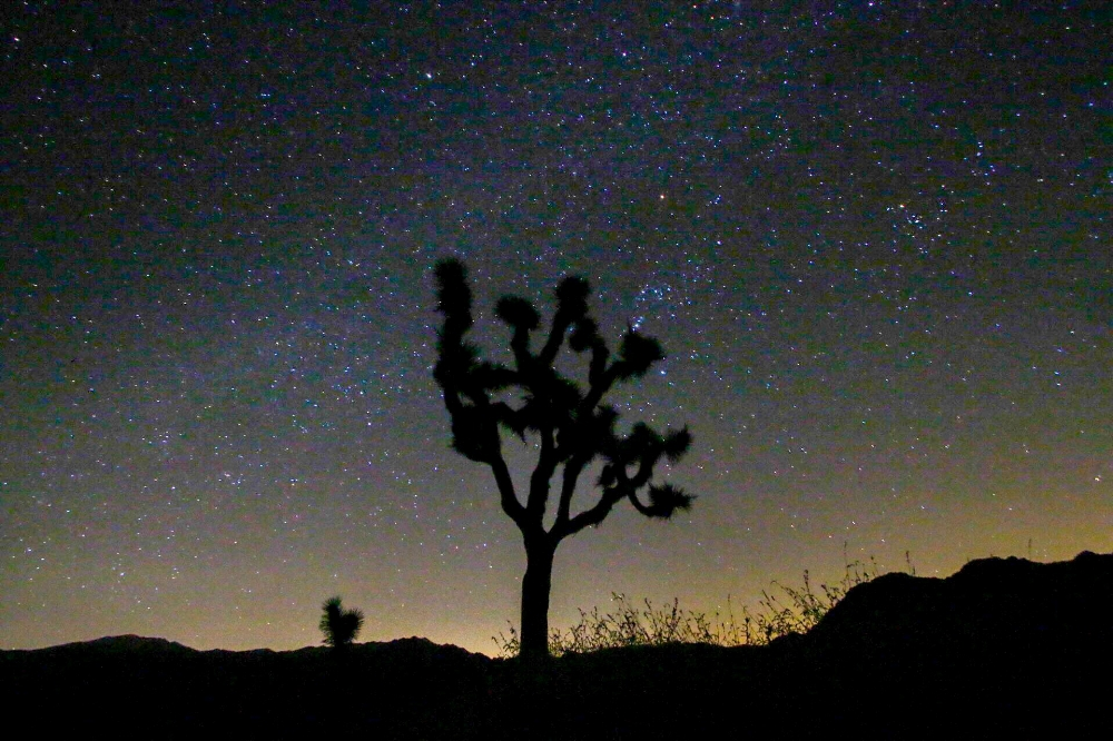Night sky in Joshua Tree National Park