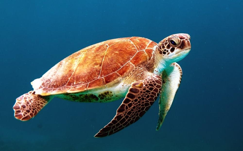 sea turtle 2 .jpg