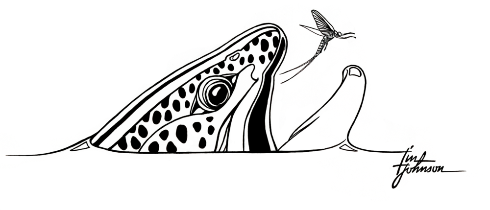 Mayfly Project_Header.png