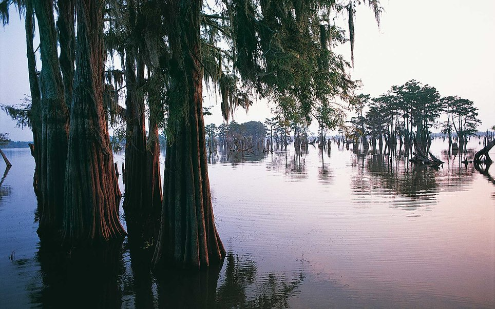 Upon entering the state of Louisiana, it can almost feel like you're entering a different country.