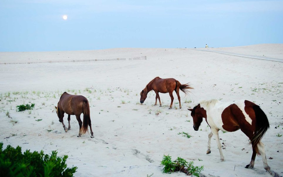 Too many people driving across Maryland go right past the National Seashore, which is inhabited by wild horses, without even knowing to stop.