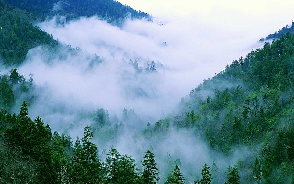 The Great Smoky Mountain National Park is America's most visited park, and for good reason. Car-bound families will find 384 miles of paved and unpaved roads to explore, while those willing to stray a bit further from the beaten path will find beautiful wilderness.