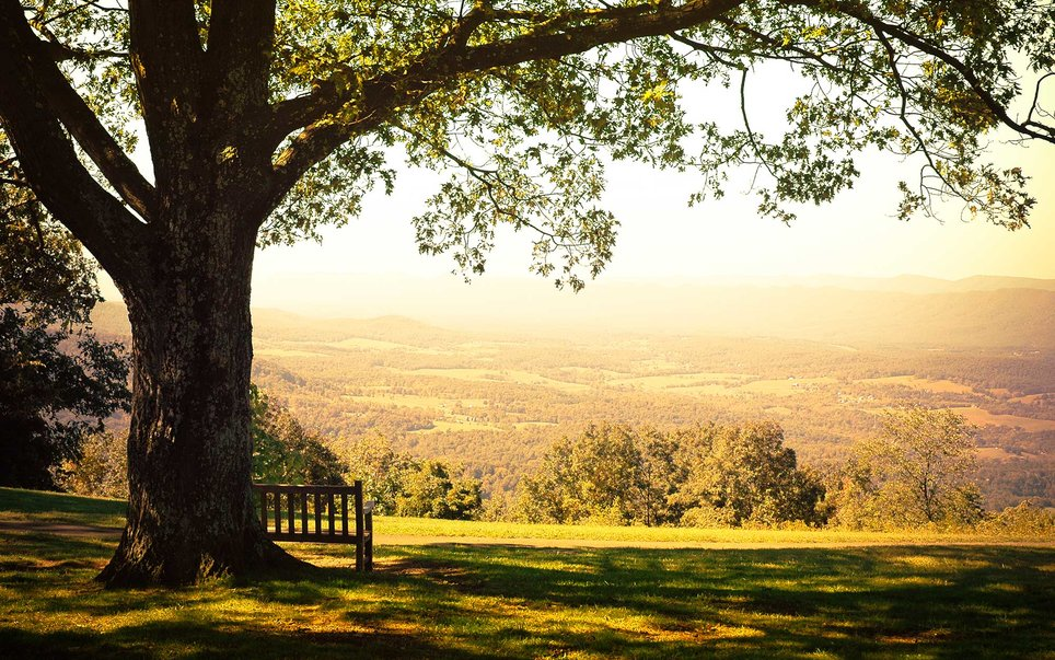 Located just over an hour's drive from Washington D.C., Shenandoah National Park offers a wilderness escape without having to venture too far.