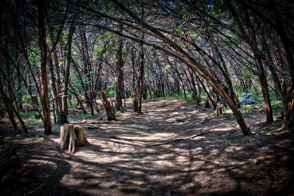 In Austin, you don't just camp at county and state parks, but in city parks, too!Or at least you can camp at Emma Long Metropolitan Park, just west of town on the Colorado River.The park offers both primitive campsites with no water, and premium campsites with water and electricity.