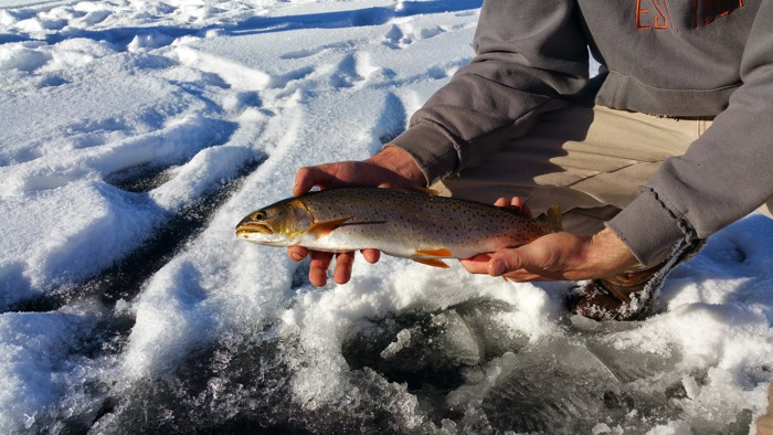 While the temperatures at Strawberry regularly dip below zero during the winter, proper preparation and tent heating will get you through the night comfortably. From catching big cutthroat and rainbow trout through the ice to riding machines through giant snow drifts, Strawberry has something for everyone.