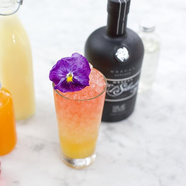 Preview of the shoot from Tuesday with @sourcedcraftcocktails 🍹 Can't wait to share the rest of the stunning shoot. Love partnering with a company that values quality ingredients and fostering community 🙌🏼