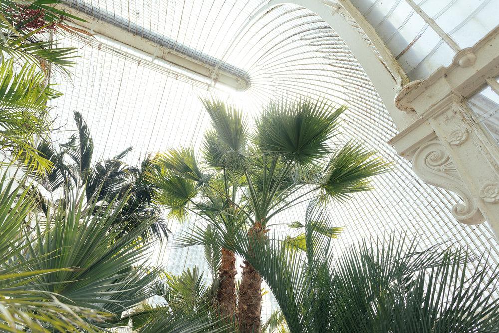 inside Bicton palmhouse