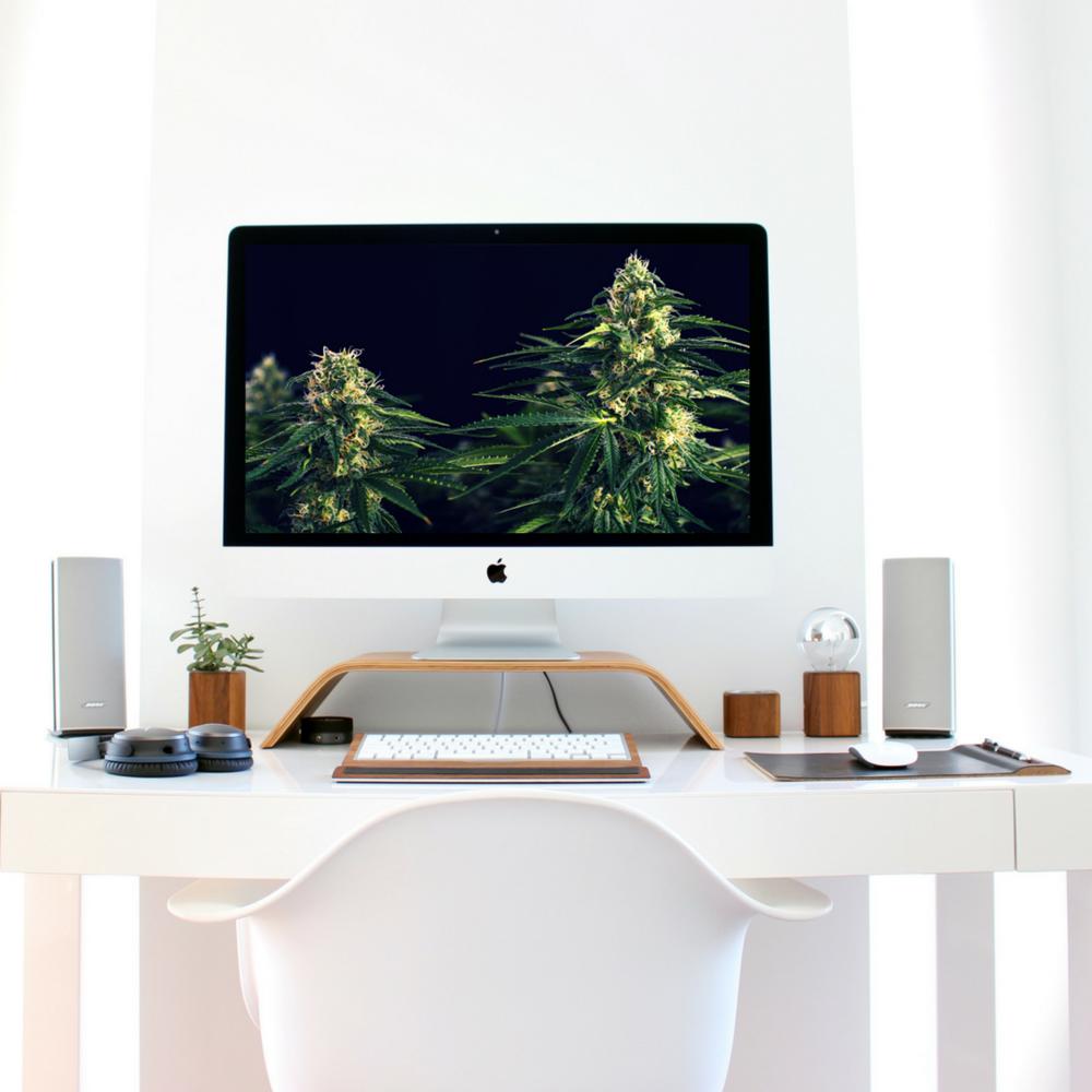 cannabis website.jpg