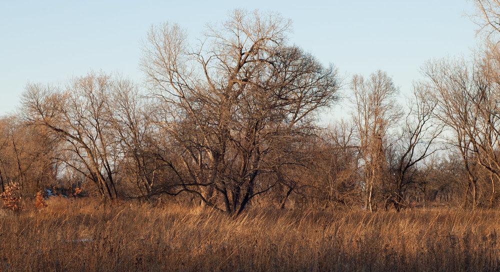 savannah-prairie-20171224.jpg