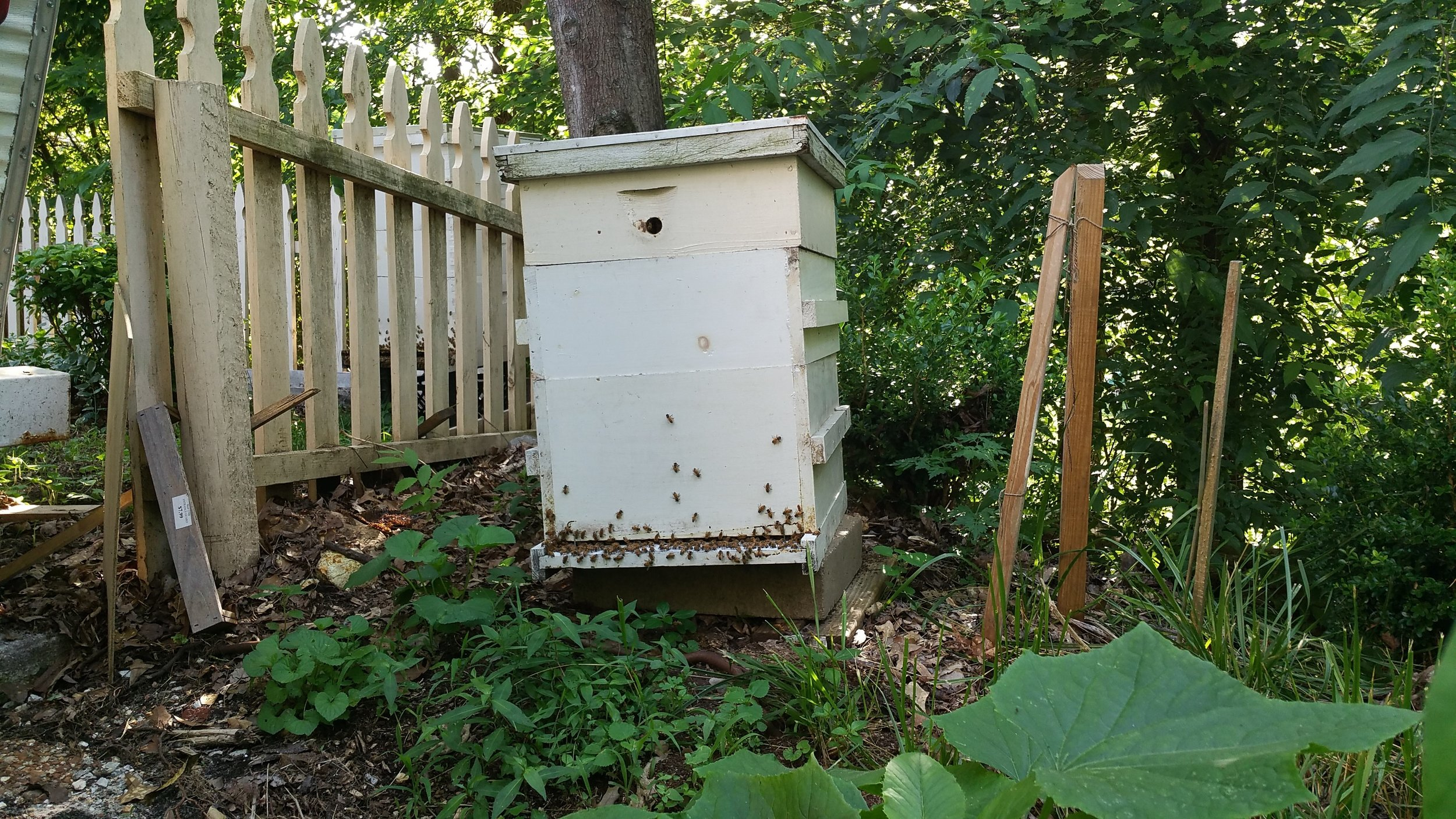 honey bee hive in garden
