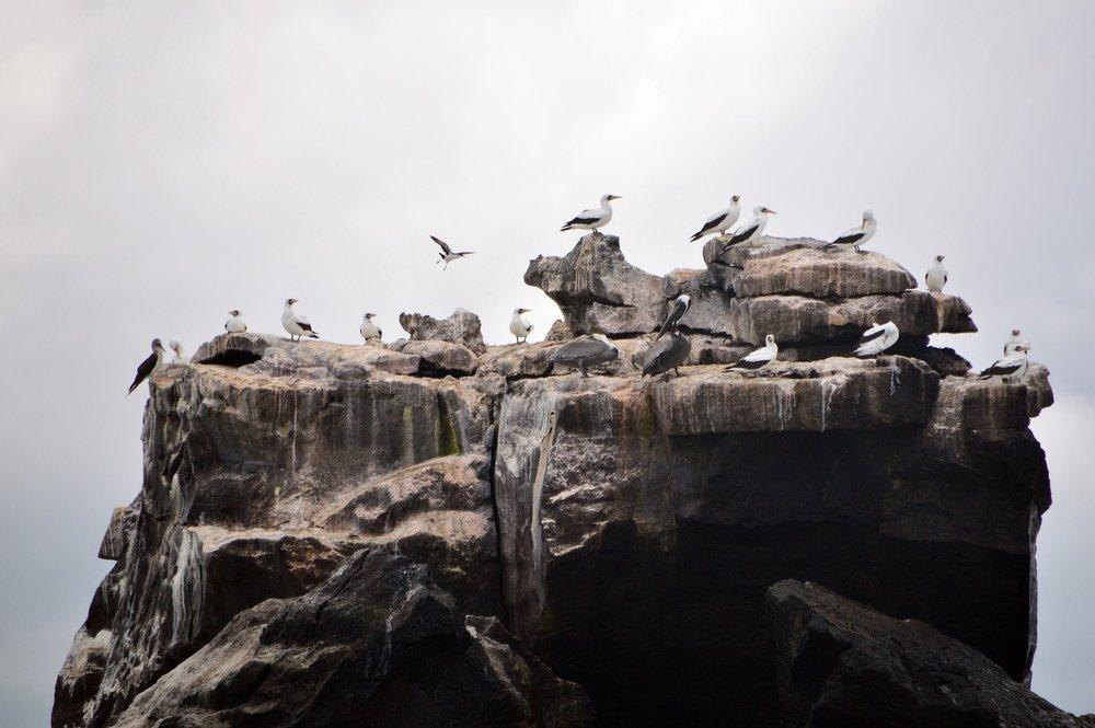 birds-galapagos.jpg