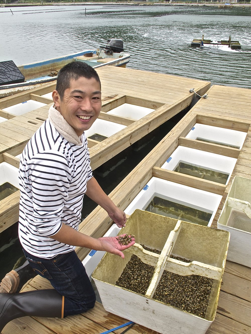 Takashi Suzuki proudly displaying his spats in October before putting them in plastic cages in the pond to mature during the winter months.