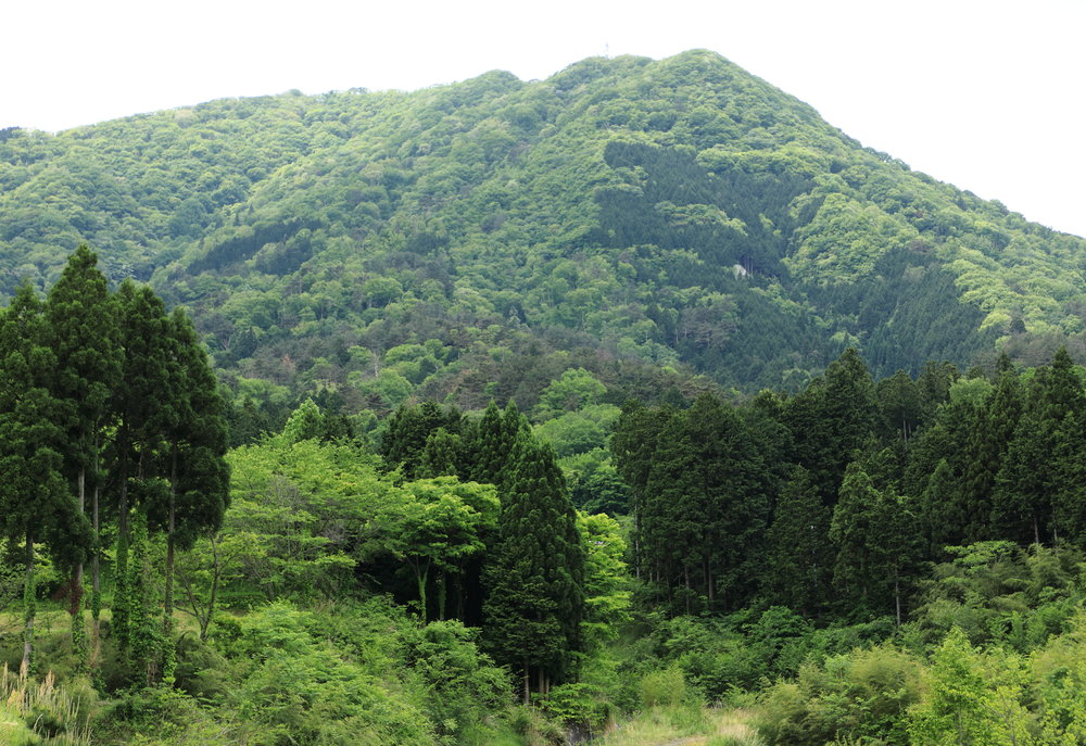 The rich, green tapestry of Japan's mountainscapes in late spring are filled with the light purple, pink, and pale blue of wild wisteria, azalea, and iris, making it a beautiful time to explore the countryside.