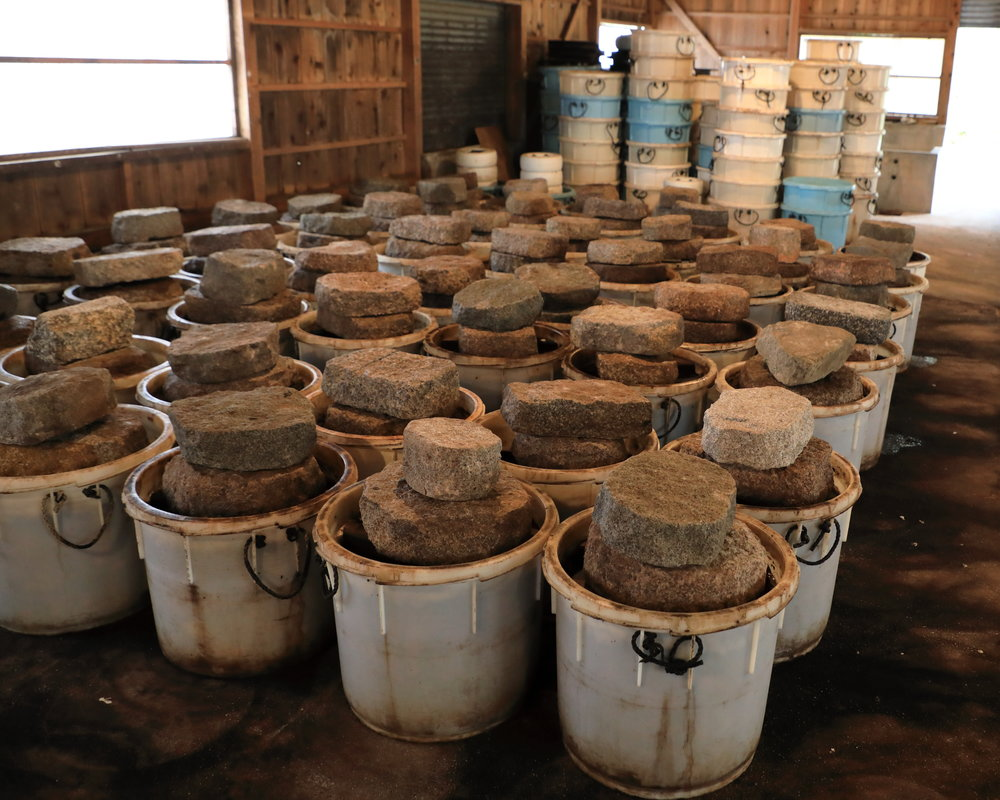 After being weighted down by stones and fermented for a month, Shibakyu's  shibazuke  are ready to be eaten in mid-September and can mature for up to one year in their buckets.