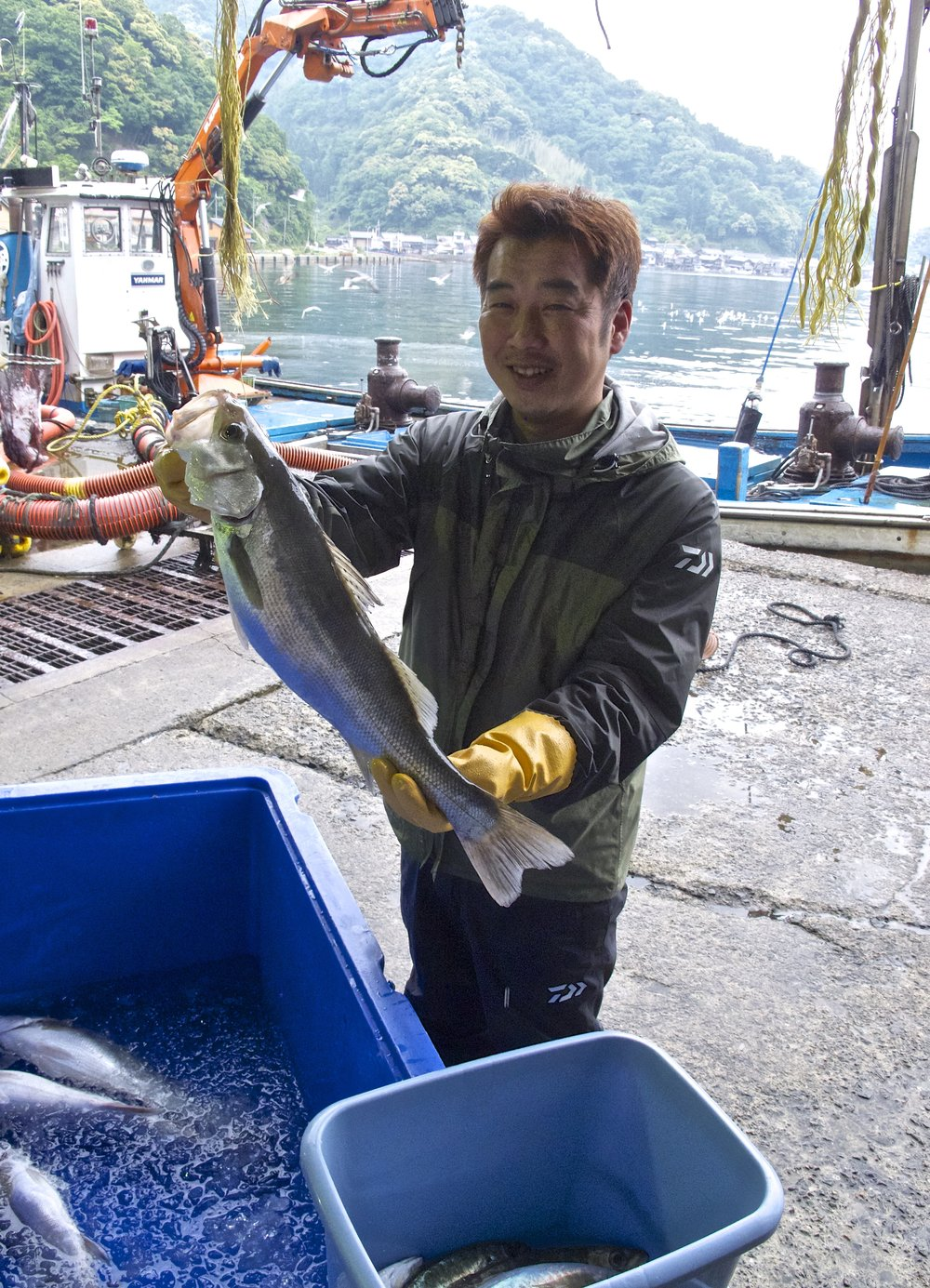 Kengo Kagi holds up a  sawara,  or Spanish mackerel, at Ine's fish harbor, the  hamauri .  Sawara  is considered the best kind of mackerel in Japan because of its size and succulent white flesh.