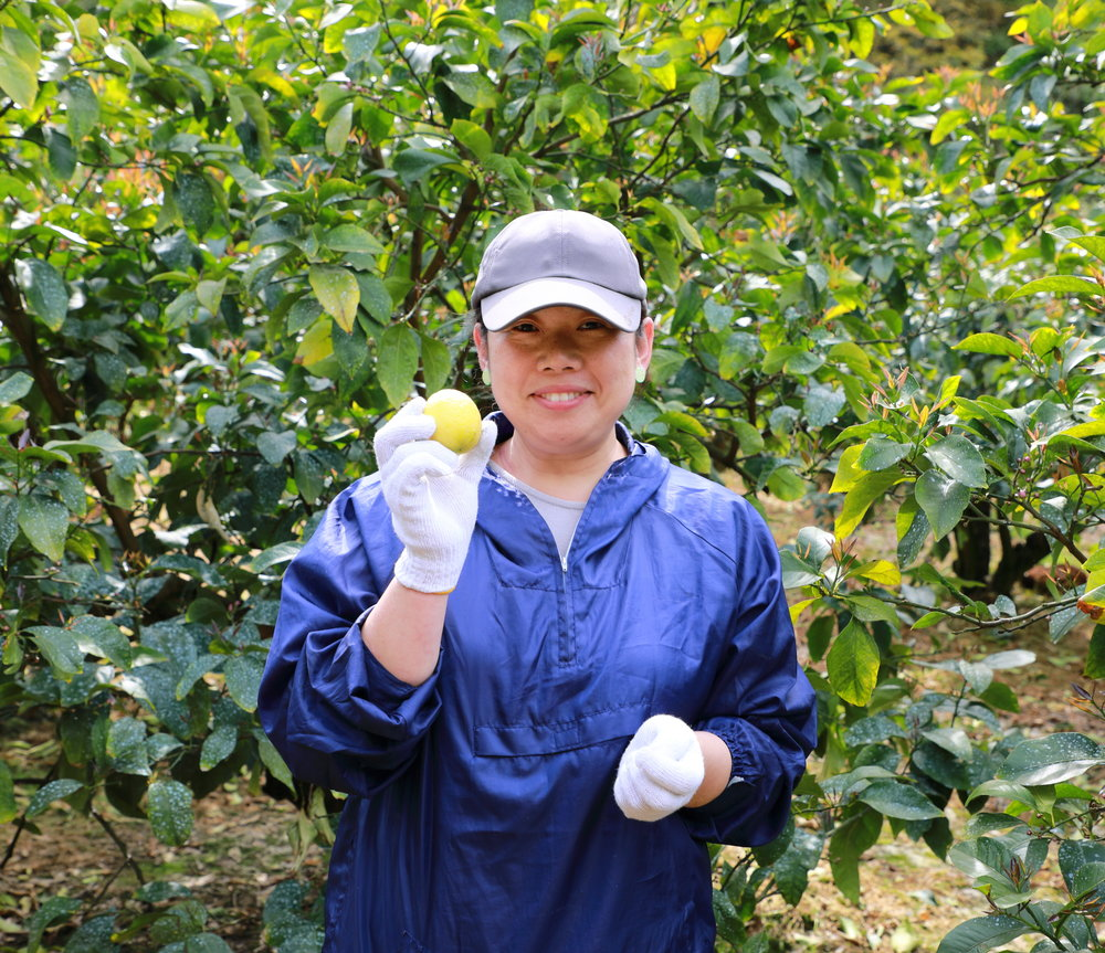 Aki Iwasaki moved with her family to Osaki-kamijima Island in the Seto Inland Sea from Kyoto six years ago to take over an abandoned lemon farm and is now growing some of the sweetest, most flavorful lemons and green lemons in Hiroshima prefecture.