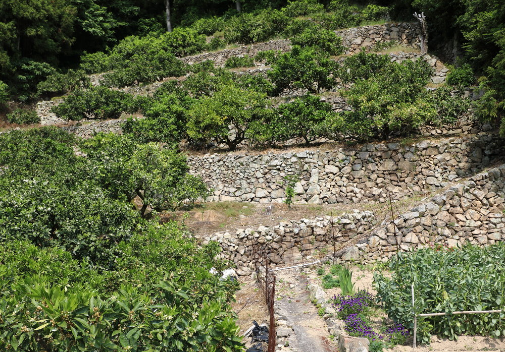 Built over centuries to enhance the farming and growing conditions of citrus in Japan,  ishizumi  stone terraces add to the beauty and paradise garden-like appearance of the landscape.