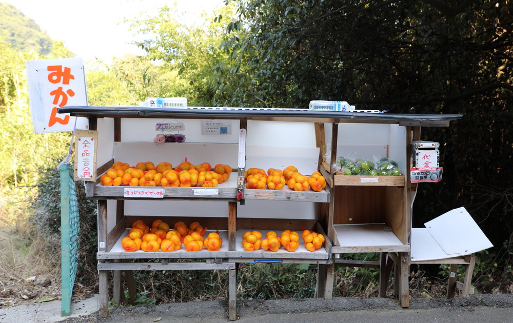 Bags of citrus available for sale on an honor basis at roadside stands are a common feature in the countryside during the peak growing seasons of fall and winter.