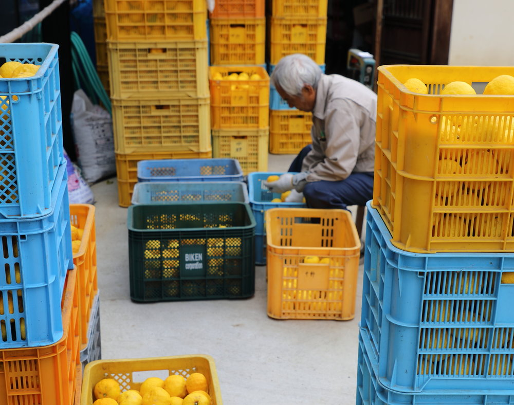 An organic  yuzu  farmer preparing his fruit for market in Ehime prefecture on Shikoku Island. During the height of  yuzu  season, naturally-grown  yuzu  are available for ¥100-200 per bag in the island's small towns and villages.