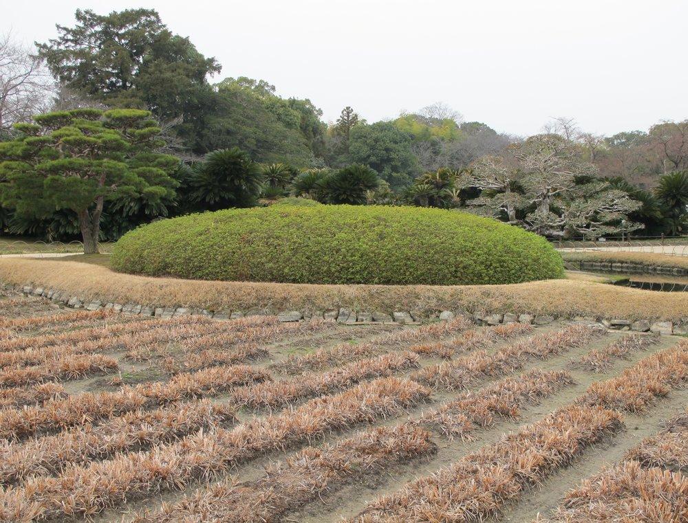 Winter view of the Iris Gardena at Kōrakuen.