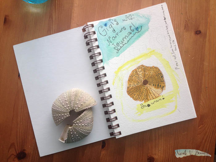 embarking on nature journaling for science-3