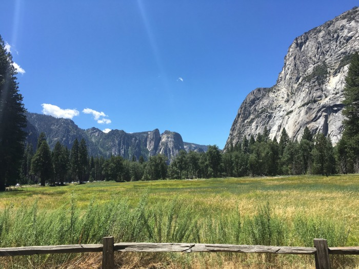 meadow in Yosemite