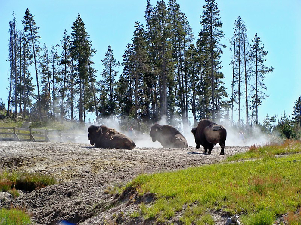 North America_WY_Yellowstone nat-parks_KV.jpg