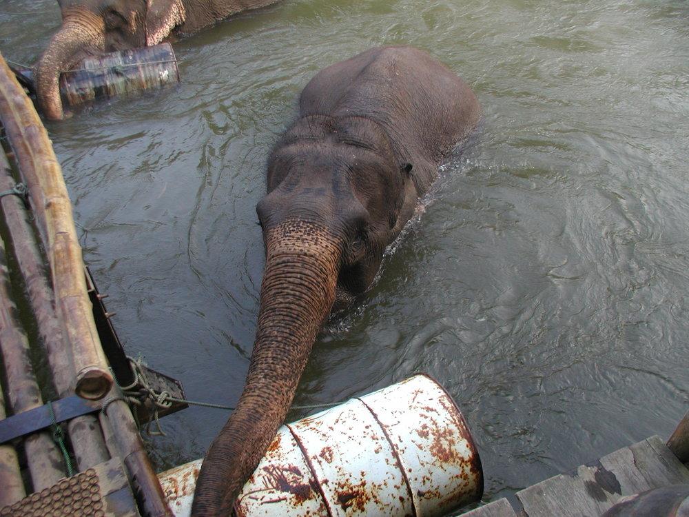 Elephants in the river. (1) (1).jpg