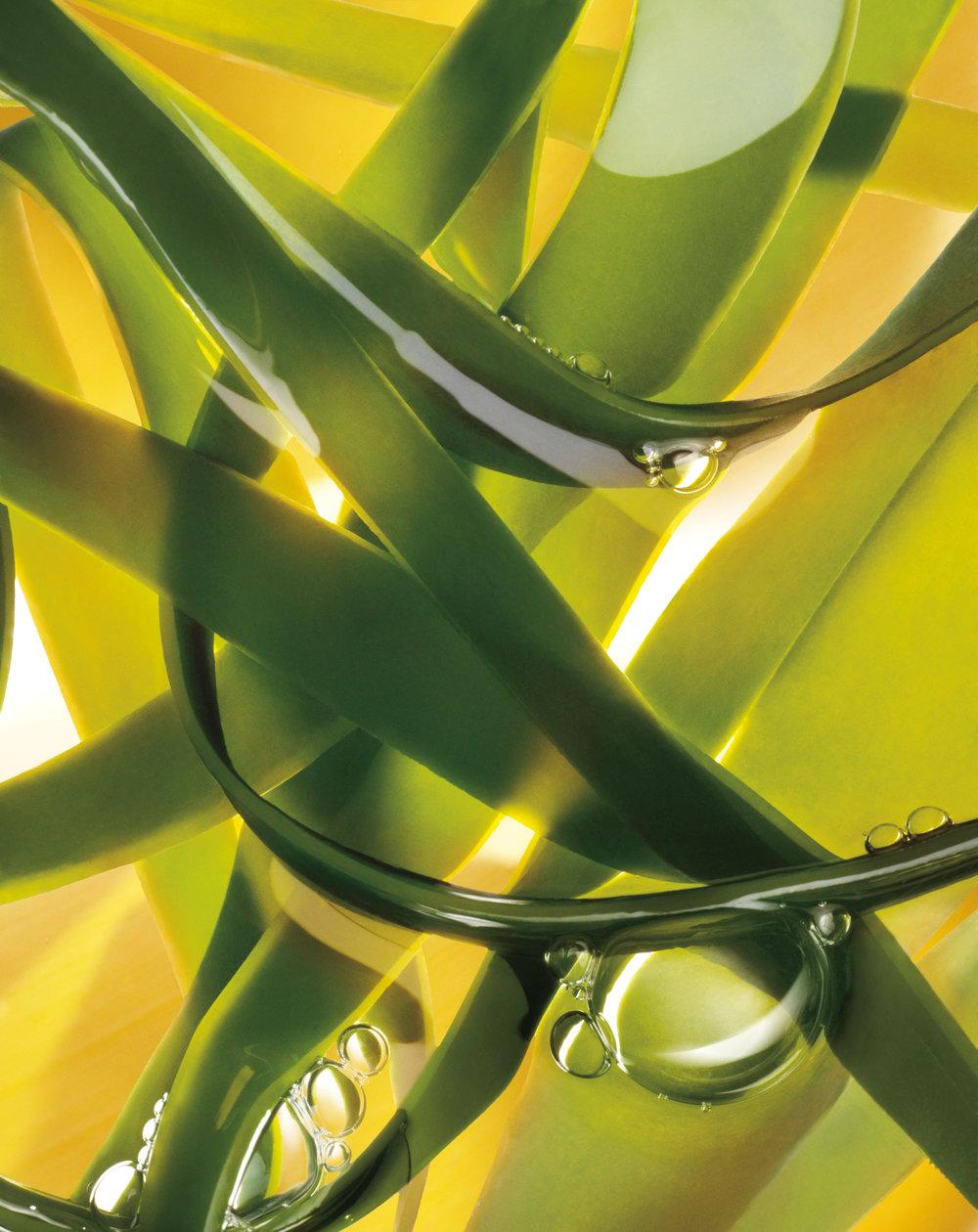 K_seaweed_3_302_b.jpg