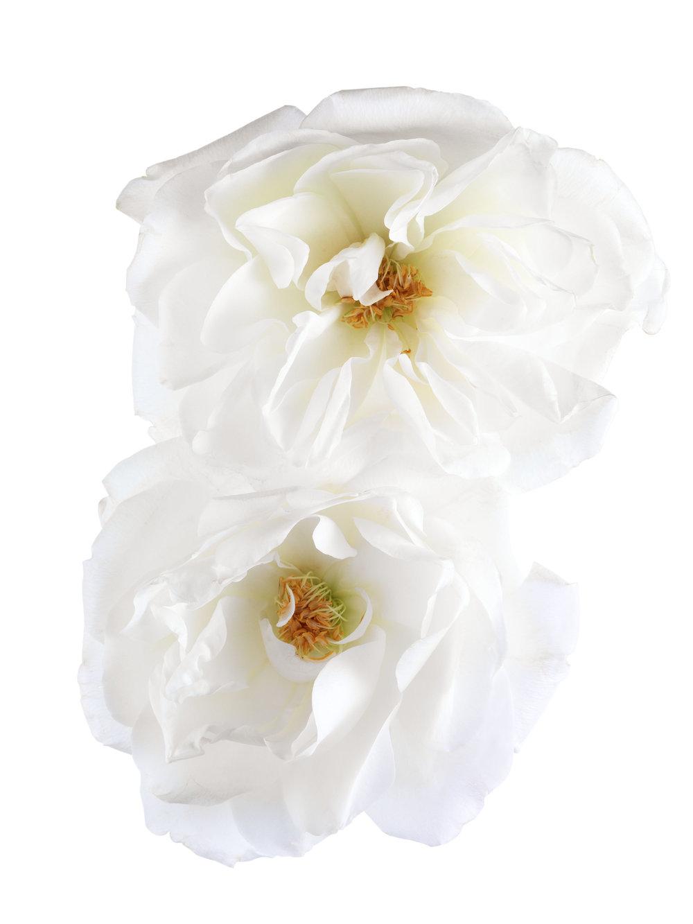 rose_cover_047_S2.jpg