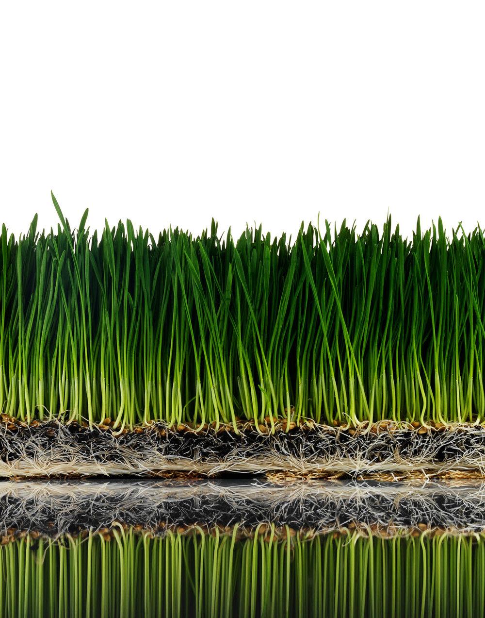 +++grass_387_L.jpg