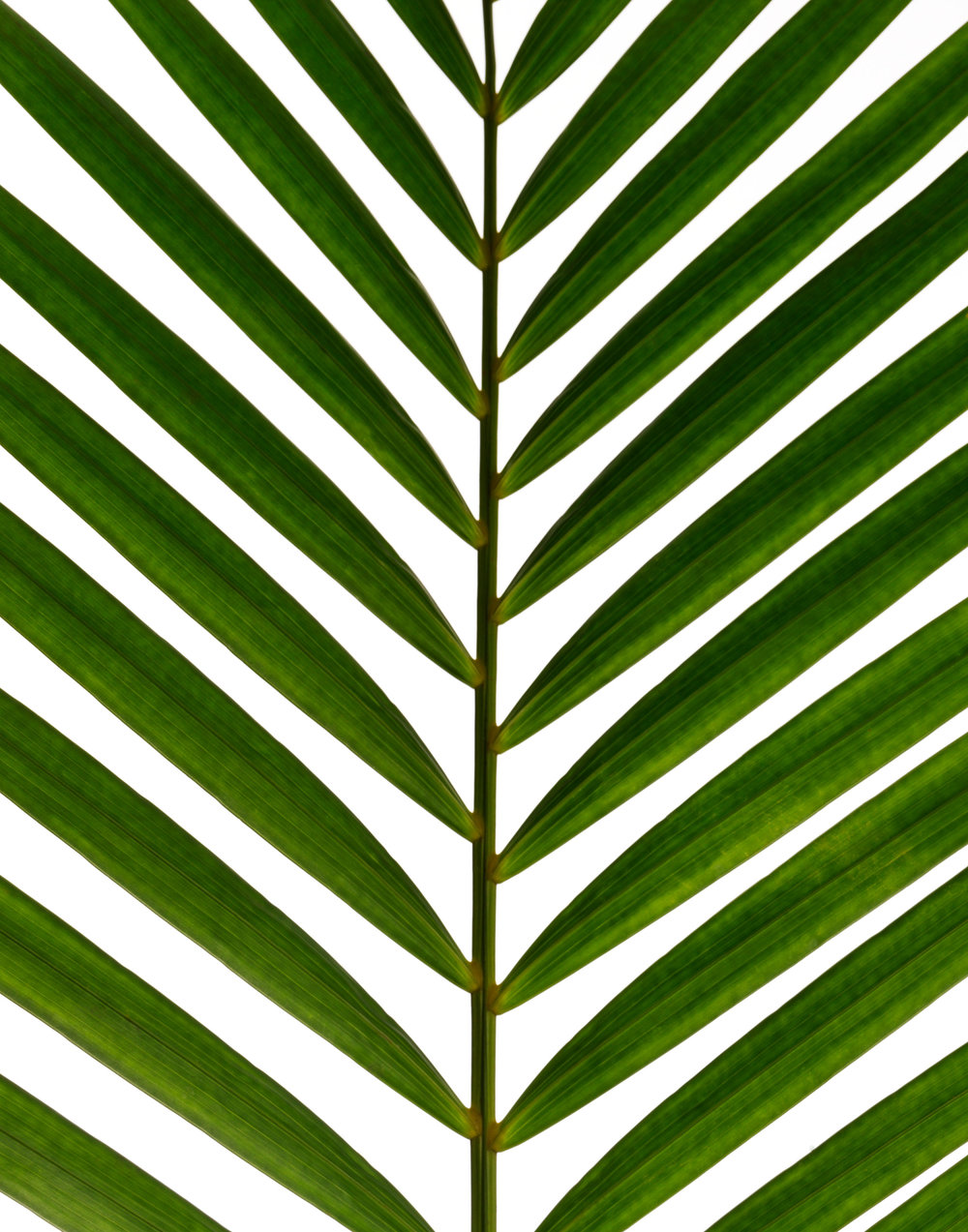 tropical_palm_010_R.jpg