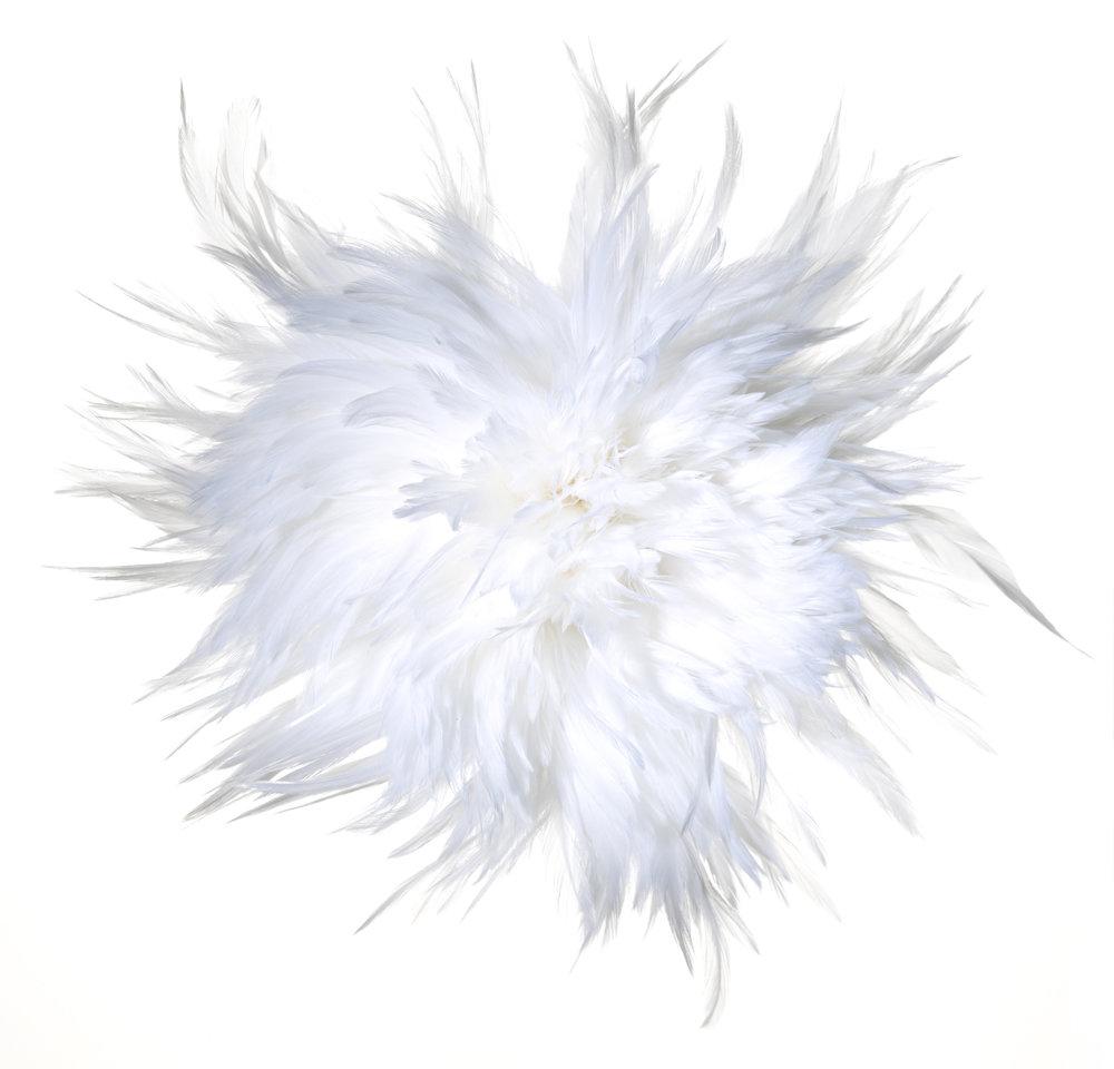 feather_026.jpg